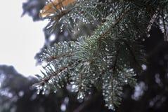 Drzewa zakrywający z lodem Zdjęcie Stock