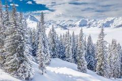 Drzewa zakrywający świeżym śniegiem w Kitzbuhel ośrodku narciarskim, Tyrolian Alps, Austria Zdjęcia Royalty Free