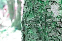 Drzewa zamazany tło Obrazy Royalty Free
