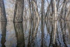 Drzewa zanurzający w jezioro wodzie obrazy royalty free