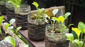 Drzewa zasadzają w przetwarzać plastikowych butelkach Zasadzający w butelce klingeryt przetwarza obrazy royalty free