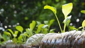 Drzewa zasadzają w przetwarzać plastikowych butelkach Zasadzający w butelce klingeryt przetwarza zdjęcia royalty free