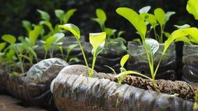 Drzewa zasadzają w przetwarzać plastikowych butelkach Zasadzający w butelce klingeryt przetwarza zdjęcie royalty free