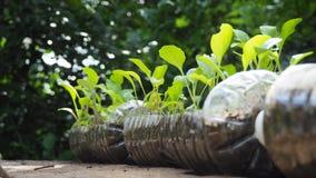 Drzewa zasadzają w przetwarzać plastikowych butelkach Zasadzający w butelce klingeryt przetwarza obraz stock
