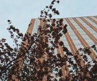 Drzewa ziemia obraz stock