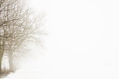 drzewa zimy mgły Zdjęcie Stock