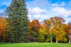 Drzewa zmienia kolory w jesieni Zdjęcie Royalty Free