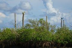 Drzewek palmowych birdhouses obrazy royalty free