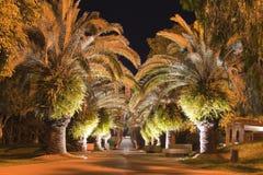 drzewka palmowe Zdjęcia Royalty Free