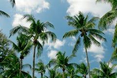 Drzewka palmowe zdjęcia stock