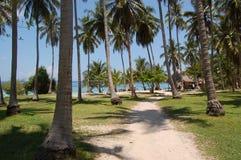 drzewka palmowe Fotografia Royalty Free