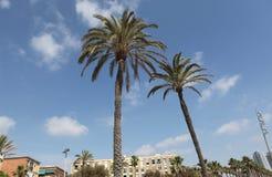 Drzewka palmowe Barcelona Obrazy Royalty Free