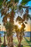 Drzewka palmowe blisko morza Obrazy Stock
