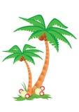 drzewka palmowe dwa Obraz Royalty Free