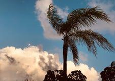 Drzewka palmowe i żywe chmury nad - fotografia stock