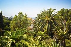 Drzewka palmowe i agawy Zdjęcia Royalty Free