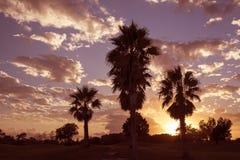Drzewka palmowe i chmurnego nieba usa Zdjęcia Stock