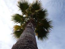 Drzewka palmowe i chmurni nieba Zdjęcia Stock