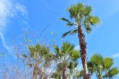 Drzewka Palmowe i Ciepły słońce Obrazy Royalty Free