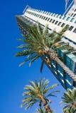 Drzewka palmowe i drapacz chmur Obraz Stock
