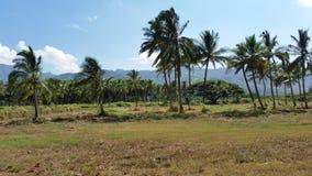 Drzewka Palmowe i Góry Fotografia Stock
