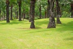 Drzewka palmowe i gazony w wieczór Obraz Stock