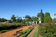 Drzewka palmowe i kwiaty w parku Obraz Royalty Free