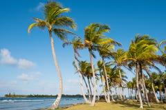 Drzewka palmowe i niebieskie niebo - drzewka palmowego tło - Zdjęcie Royalty Free