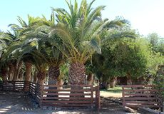 Drzewka palmowe i niebo na ?wiat?o s?oneczne dniu obrazy royalty free