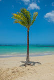 Drzewka palmowe i ocean Fotografia Royalty Free