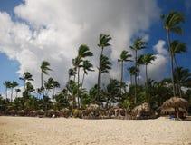 Drzewka palmowe i piaskowata plaża, republika dominikańska Zdjęcia Royalty Free