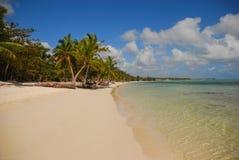 Drzewka palmowe i piaskowata plaża w republice dominikańskiej Obrazy Royalty Free