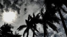 Drzewka palmowe i słońce połysk Fotografia Royalty Free
