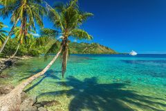 Drzewka Palmowe i zaciszność trzymać na dystans przy Moorea w Tahiti zdjęcie stock