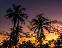 Drzewka palmowe i zmierzch w Goa Zdjęcie Royalty Free