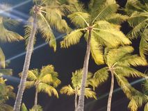 Drzewka palmowe iluminujący przy nocą w Brasil Zdjęcie Royalty Free