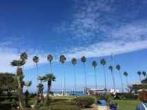 Drzewka palmowe Kalifornia Zdjęcie Royalty Free