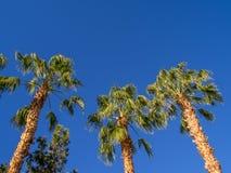 Drzewka palmowe, Kalifornia fotografia stock