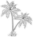 Drzewka palmowe, kontury Fotografia Stock