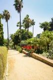 Drzewka palmowe, kwiaty i agawa krajobraz, Zdjęcia Stock