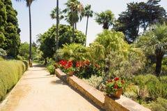 Drzewka palmowe, kwiaty i agawa krajobraz, Fotografia Royalty Free