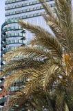 Drzewka palmowe, modren budynki w tle fotografia stock