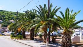Drzewka palmowe morzem obrazy royalty free