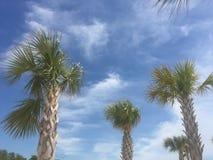 Drzewka Palmowe na Biloxi plaży Zdjęcie Stock