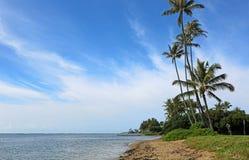 Drzewka palmowe na Maunalua plaży Zdjęcia Stock