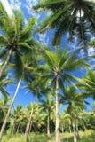Drzewka palmowe na niebieskiego nieba tle Zdjęcie Stock