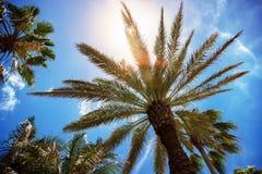 Drzewka palmowe na niebieskim niebie z światłem słonecznym pojęcia flaga podróży mapy szpilki plastikowa czerwona pozycja tło por Fotografia Stock