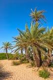 Drzewka palmowe na piasek plaży Zdjęcia Royalty Free
