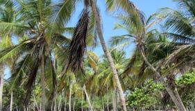 Drzewka Palmowe na plaży obraz royalty free