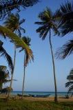 Drzewka palmowe na plaży Togo w Aneho obrazy royalty free